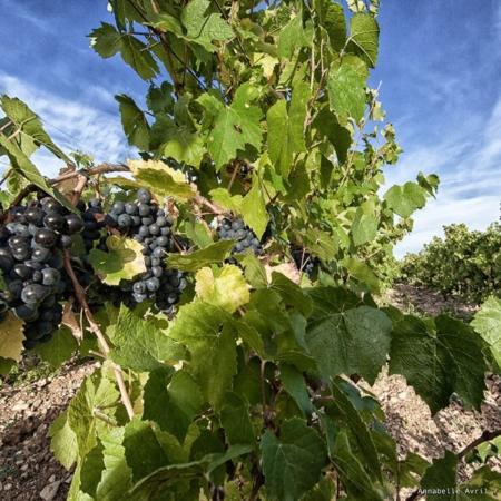 Corporate - Domaine des Hautes Vignes - Annabelle Avril Photographie #0