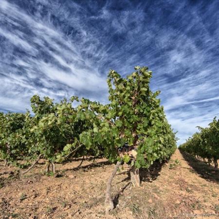 Corporate - Domaine des Hautes Vignes - Annabelle Avril Photographie #1