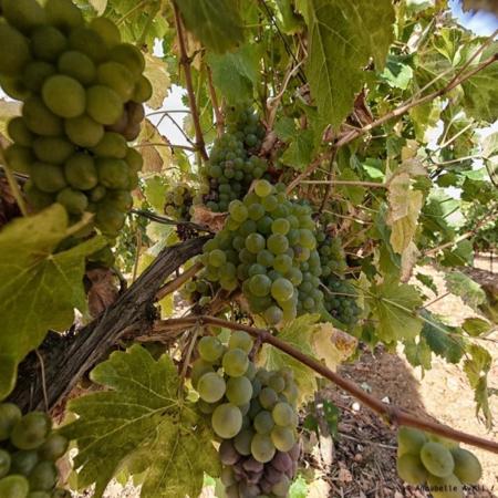 Corporate - Domaine des Hautes Vignes - Annabelle Avril Photographie #11
