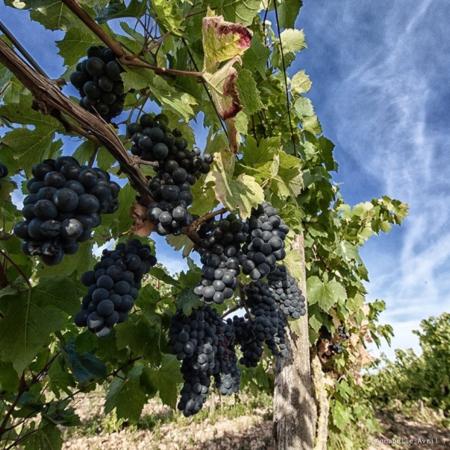 Corporate - Domaine des Hautes Vignes - Annabelle Avril Photographie #2