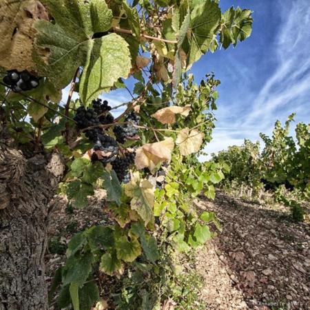 Corporate - Domaine des Hautes Vignes - Annabelle Avril Photographie #4