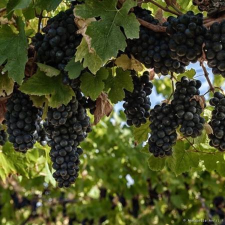 Corporate - Domaine des Hautes Vignes - Annabelle Avril Photographie #5