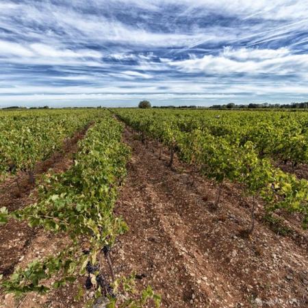 Corporate - Domaine des Hautes Vignes - Annabelle Avril Photographie #7