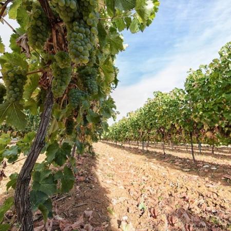 Corporate - Domaine des Hautes Vignes - Annabelle Avril Photographie #8