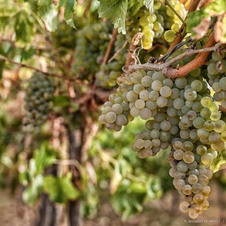 Corporate - Domaine des Hautes Vignes - Annabelle Avril Photographie #9