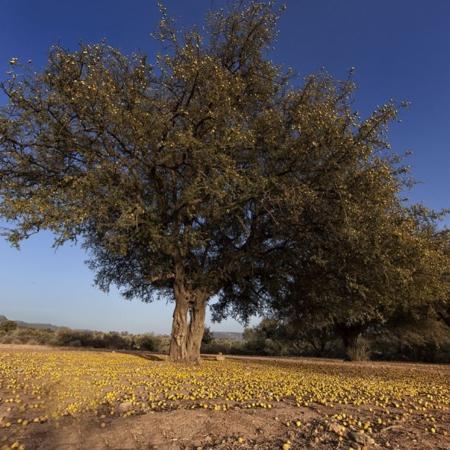 Graine de malice - Maroc - WECF - Annabelle Avril Photographie #0