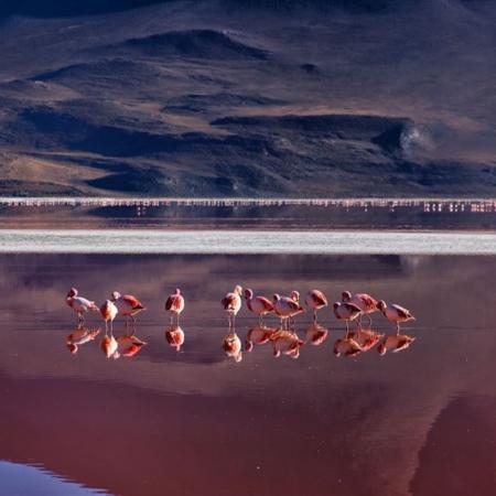 Désert du Sud Lipez - Bolivie - Annabelle Avril Photographie #19
