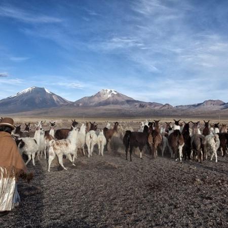 Parc de Sajama - Bolivie - Annabelle Avril Photographie #20