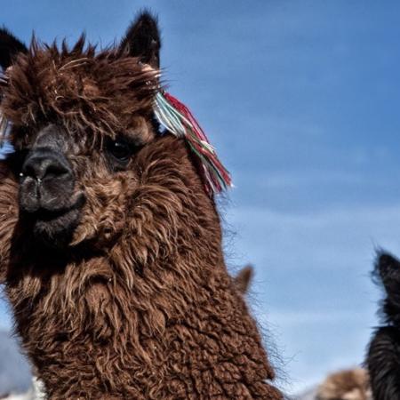 Parc de Sajama - Bolivie - Annabelle Avril Photographie #23