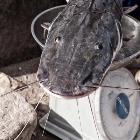 Se vende pescado fresco - Pérou - Annabelle Avril Photographie #29